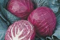 Red%20cabbage%202