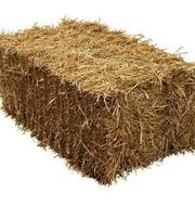 19098561 bale of hay isolated on a white background as an agriculture farm and farming symbol of harvest time
